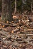 Gespleten boomboomstammen, die in de boshoutbewerkingsindustrie liggen De boomstammen van bomen vielen aan de grond rond de boom Stock Foto's