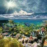 Gespleten mening met golf het verpletteren en koraalrifvissen royalty-vrije stock afbeelding