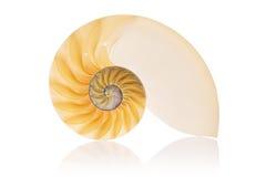 Gespleten Nautilus Stock Afbeelding