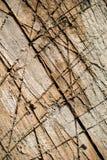 Gespleten ted hout met verschillende schaduwen en behandeld met diepe besnoeiingen en krassen Stock Fotografie