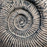 Gesponnene große trilobite Beschaffenheit stockfoto