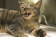 Gesprächige Katze, die an einem warmen Tag legt Lizenzfreie Stockbilder