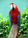Gesprächiger Vogel Lizenzfreie Stockbilder