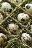 Gesprenkelte Eier. Lizenzfreie Stockfotografie