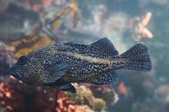 Gesprenkelte Fische umgeben mit Farbe Stockbild