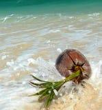 Gespritzter korallenroter Strand-Kokosnuss SE Asien Stockfoto