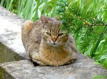 Gestörte Katze, die auf einer Betonmauer stillsteht Lizenzfreies Stockbild