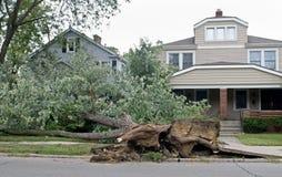 Gestürzter Baum Stockbilder