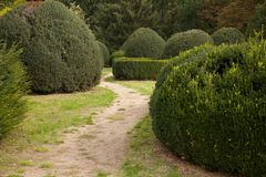 Gestalte gegeven bukshouten en een weg in een veronachtzaamd park stock afbeeldingen