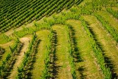 Gestalten Sie Ansicht des Weinbergs mit Reihen von Trauben landschaftlich Lizenzfreies Stockbild