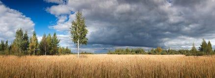 Gestalten Sie Ansicht mit breitem hellem gelbem wildem Feld mit hohem Gras mit einem einzelner Baumwalddrastischen blauen Himmel  Stockfotos