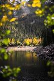 Gestalten Sie Ansicht von einem See, Schnee mit einer Kappe bedeckten von Bergen und von Herbstlaub nahe Aspen, Colorado landscha stockfoto