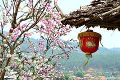 Gestalten Sie Ansicht von Kirschblüte-Baum mit chinease Lampe landschaftlich Lizenzfreie Stockfotos