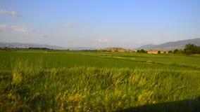 Gestalten Sie Ansicht von Reis- und Weizenfeldern von das Auto schnell fahren landschaftlich, das als Transportwagen benutzt wird stock video footage