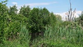 Gestalten Sie auf dem Wasser, mit Bäumen, Gräser landschaftlich stock footage