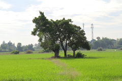 Gestalten Sie Baum auf dem Feld unter weißem Himmel landschaftlich Lizenzfreie Stockfotos