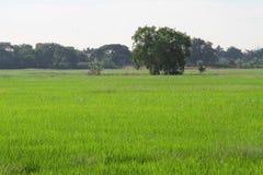 Gestalten Sie Baum auf dem Feld unter weißem Himmel landschaftlich Stockfotos