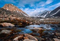 Gestalten Sie Beschaffenheit der Berge von Spitzbergen Longyearbyen Svalbard an einem polaren Tag mit arktischen Blumen im Sommer Lizenzfreies Stockfoto