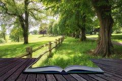 Gestalten Sie Bild des schönen vibrierenden üppigen grünen Waldwaldlandes landschaftlich Lizenzfreie Stockfotos