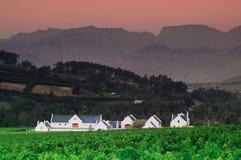 Gestalten Sie Bild eines Weinbergs, Stellenbosch, Südafrika landschaftlich. Stockfotografie
