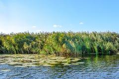 Gestalten Sie Bild von schilfigen und alten Bäumen eines kleinen Flusses landschaftlich Lizenzfreie Stockfotografie