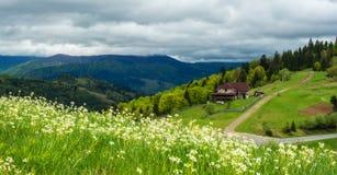 Gestalten Sie in den Bergen mit Wildflowers im Vordergrund landschaftlich Lizenzfreie Stockfotografie