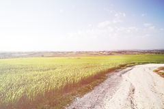 Gestalten Sie in der Beschaffenheit des Himmels mit bewölktem und der Fahrbahn durch einen immergrünen Waldweg landschaftlich, de Lizenzfreies Stockbild