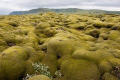 Gestalten Sie, die Lavaforderung landschaftlich, die durch Moos, Island durchgesetzt wird Lizenzfreie Stockfotografie