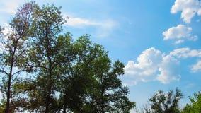 Gestalten Sie, die Wolken landschaftlich, die über ein Feld mit Bäumen sich bewegen stock video