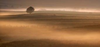 Gestalten Sie an einer frühen Stunde des Tages landschaftlich Stockfotografie