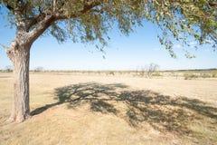Gestalten Sie entlang I 40, Route 66, gerade aus Adrian, Texas, USA heraus landschaftlich Lizenzfreie Stockfotografie