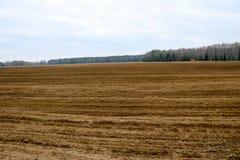 Gestalten Sie Feld, Braunerde mit Betten, Furchen für das Pflügen mit Ernten auf dem Hintergrund des Waldes landschaftlich Stockfoto