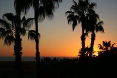 Palme-Sonnenuntergang Lizenzfreie Stockfotos