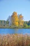 Gestalten Sie Frühherbst die Seegelbbäume auf den Ufern, Schilfe im vorderen und grünen Wald im Abstand landschaftlich WestSayan  Stockbild