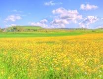 Gestalten Sie gelbes Blumenfeld unter blauem Himmel im Frühjahr landschaftlich Lizenzfreie Stockbilder