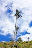 Gestalten Sie im Cocora-Tal mit Wachspalme, zwischen dem mounta landschaftlich lizenzfreie stockfotografie