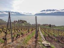 Gestalten Sie im Frühjahr, Ansicht der Weinberge der Laveau-Region über See Lehmann - Genfersee - mit den französischen Alpen, bl lizenzfreies stockfoto