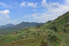 Gestalten Sie im königlichen Geburts- Nationalpark in Südafrika, afrikanische Natur, Anlagen landschaftlich Lizenzfreies Stockfoto