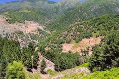 Gestalten Sie im Nationalpark Tazekka, Marokko landschaftlich Lizenzfreies Stockfoto