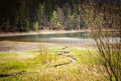Gestalten Sie landschaftlich, entspringen Sie in einen Wald nahe See Stockfotos