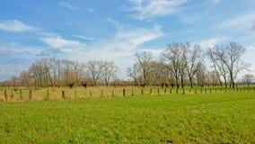 Gestalten Sie mit üppigen grünen Wiesen mit Zaun und hohen Erlenbäumen in der flämischen Landschaft landschaftlich stockfoto