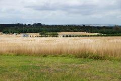 Gestalten Sie mit Ackerland und Bäumen auf Phillip Island, Victoria, Australien landschaftlich Lizenzfreie Stockfotografie