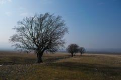 Gestalten Sie mit Bäumen an einem nebeligen und sonnigen Tag landschaftlich stockfoto