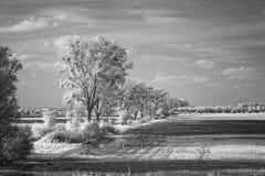 Gestalten Sie mit Bäumen im Sumpf landschaftlich, Infrarot Stockfotos