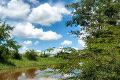 Gestalten Sie mit Bäumen und einem Fluss Waldnebenfluß, der durch herein läuft landschaftlich lizenzfreie stockbilder