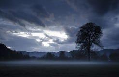Gestalten Sie mit Baum auf Wiese landschaftlich und nebeln Sie Dämmerung ein Lizenzfreies Stockfoto