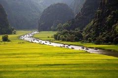 Gestalten Sie mit Bergen, Reisfeldern und Fluss landschaftlich Lizenzfreie Stockbilder