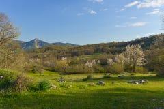 Gestalten Sie mit blühenden Bäumen am Frühling in Montenegro landschaftlich Stockbilder