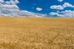 Gestalten Sie mit blauem Himmel, weißen Wolken und reifen Weizenfeldern nahe Dnipro-Stadt, Mittel-Ukraine landschaftlich Stockbild