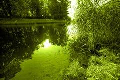 Gestalten Sie mit blinkender abgetönter grüner Farbe des Wassers und des Grases und des Sonnenlichts landschaftlich Stockfotos